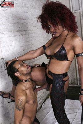 tsdcaressx01 Mistress Saki Wants to be Adored, Mistress Caress Has No Problem Punishing You