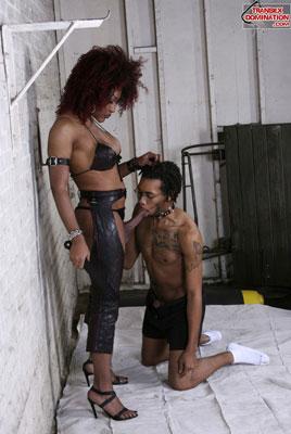 tsdcaressx02 Mistress Saki Wants to be Adored, Mistress Caress Has No Problem Punishing You