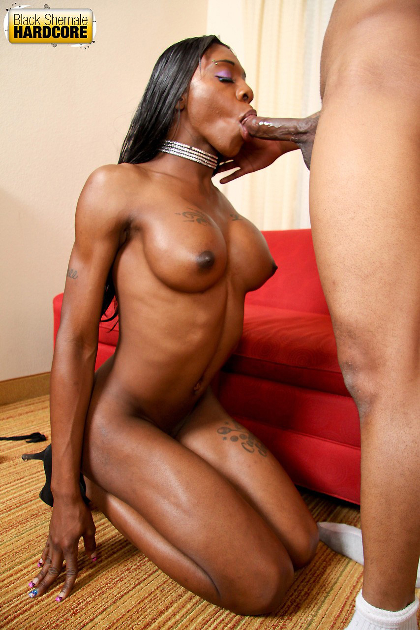 ebony shemale tumblr
